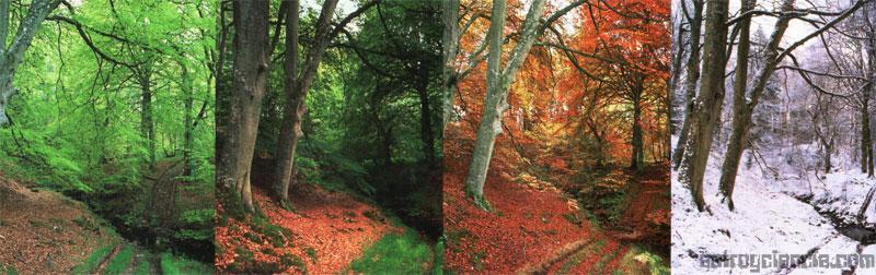 Las cuatro estaciones reflejadas en el mismo suelo