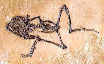 fósil del paleozóico