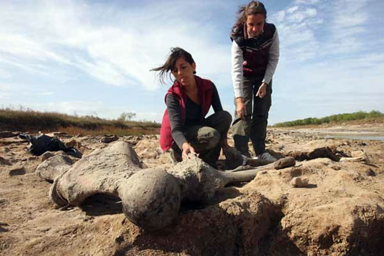paleontología