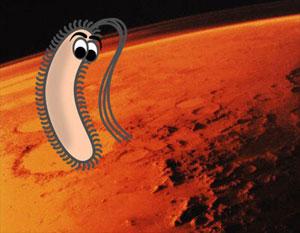 ¿Los cráteres de Marte podrían albergar vida?