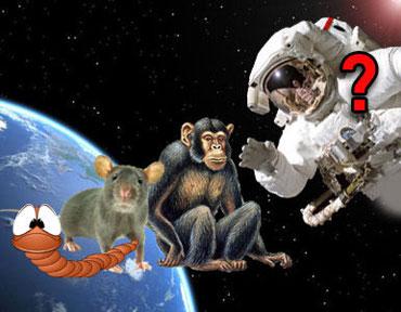 Irán, envía más animales al espacio