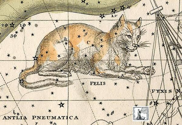 Constelación de Feliz el Gato